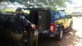 Carregamento de droga saiu da fronteira com o Paraguai